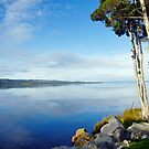 Lette's Bay, W. Tasmania by Harry Oldmeadow
