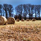 Rolls of hay by doszili