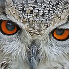""""""" Eye'm watching you"""" by mrcoradour"""
