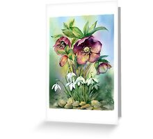 Snowdrops and Hellebores Greeting Card