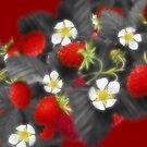 Selective &quot;coloured and Orton&quot; Strawberries... by Qnita