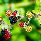 colourful fruitiness by xxnatbxx