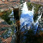 Reflection-Douglas Fir Forest by Harry Snowden