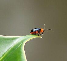 Not a Lady Bug by Penny Odom
