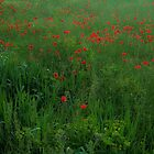 iPhone poppies by Revenant