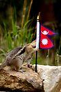 Chippy Talks About Donkeys In Nepal by Betsy  Seeton