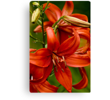 """Asiatic Lily """"Red Tiger"""" Canvas Print"""