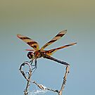 The Dragonfly by Jeff  Burns