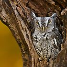 Eastern Screech Owl in stump by (Tallow) Dave  Van de Laar
