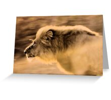 Panthera Leo - UP CLOSE ,THE CHARGING LION - in a full faced sunset Greeting Card