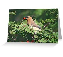 Cedar Waxwing in the Mountain Ash Berries Greeting Card