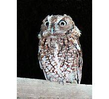 Hoot the Owl Photographic Print