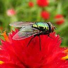 Flies Like Flowers Too! by shutterbug2010