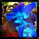 blue orchids for dad by OTBphotography