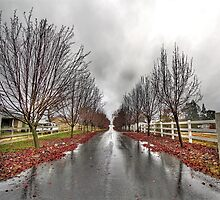 Tree-Lined Driveway, Loomis, CA by musiclover4949