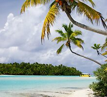 Cook Islands Palm - Aitutaki by Jenny Dean