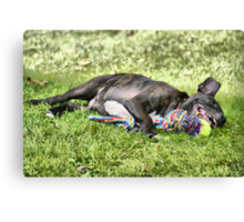 Let Sleeping Dogs Lie......... Canvas Print