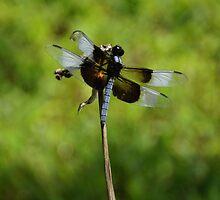 Dragonfly on a stem by agenttomcat