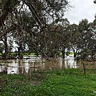 Floods at Rupanyup - Dunmunkle Creek by Jennifer Craker