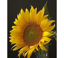 a flower for Vincent Photographic Print