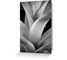 The Glasshouse Greeting Card
