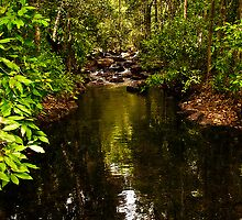 Litchfield National Park - On the way to Florence Falls by Jaxybelle