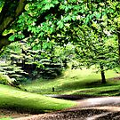 A Walk In The Park In Spring ~ Only Tree Huggers Need Apply..... by Sandra Cockayne