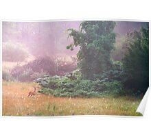 Deer in the Foggy Meadow Poster