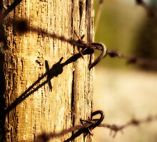 A long line of fence by JasonWilliams