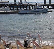 Pelicans at San Remo, Victoria, Australia by Dorothy McKay