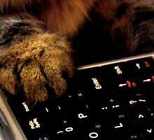 Cat paw on keyboard by Bernie Stronner