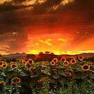 August Sunflower Skies by John  De Bord Photography