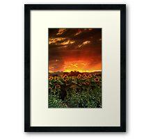 August Sunflower Skies Framed Print