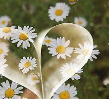 I love flower, I know boring - But I really do !! by Nina  Matthews Photography
