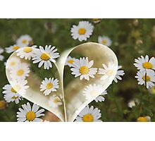 I love flower, I know boring - But I really do !! Photographic Print