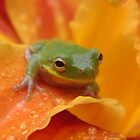 Tree Frog On Day Lily by ohhrah
