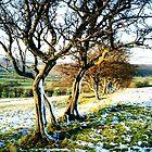 That Blasted Tree  by John Brian Dawes