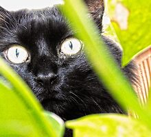 Black cat through the leaves by leonarth