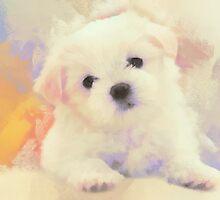 White ball of fur by rok-e