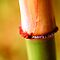 Bamboo Macro by Zach Pezzillo