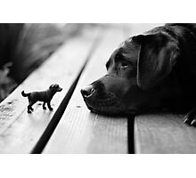 Mini Me Photographic Print