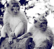 Two Monkeys by Komang