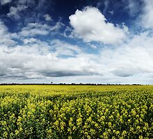 Geelong Canola by Peter Redmond