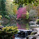 Autumn in Peasholm Park, Scarborough by Caroline  Freeman