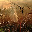 Morning Dew  by kathy s gillentine