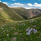 American Basin, San Juan mountains, Colorado by TheBlindHog