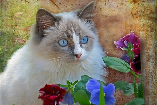 """Do these Pansies make my eyes look blue ...?"" by Rosehaven"
