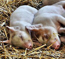 Piggy Back by Mike Higgins