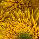 Double Shine Sunflowers - Up Close by Ann Garrett