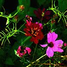 Cosmos Fading by RC deWinter
